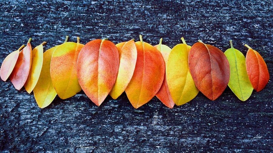 fall-1710877_960_720.jpg