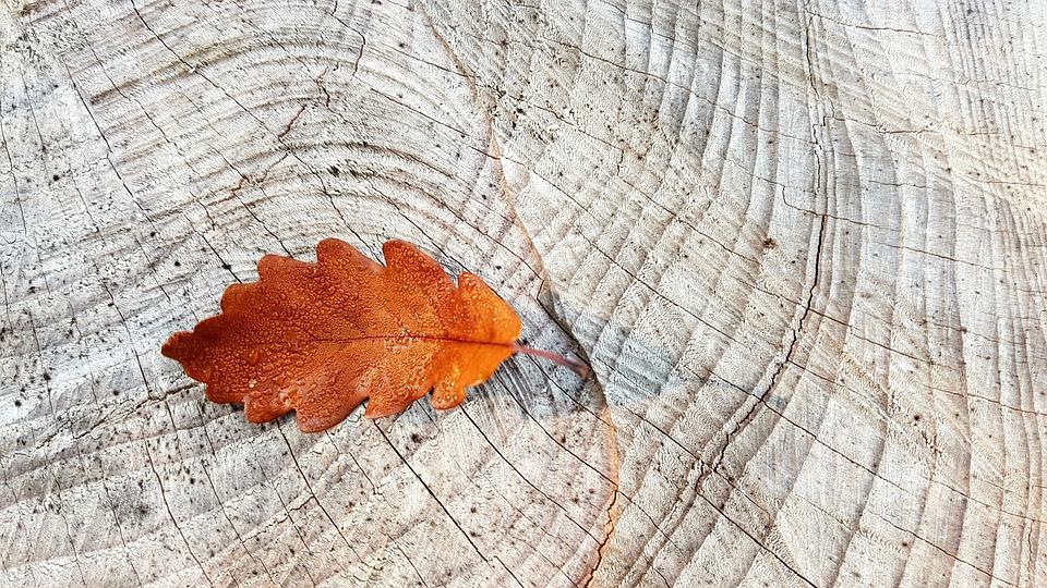 autumn-2815427_960_720